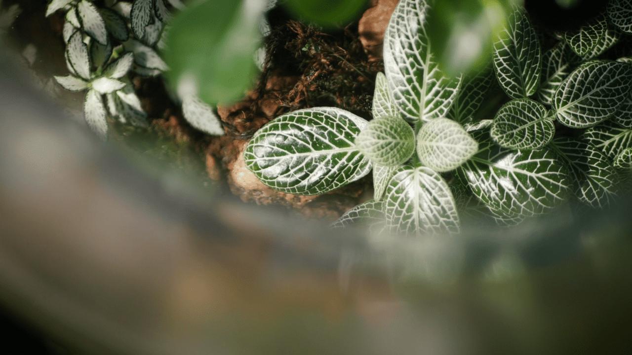 Imataki - Botanical Style